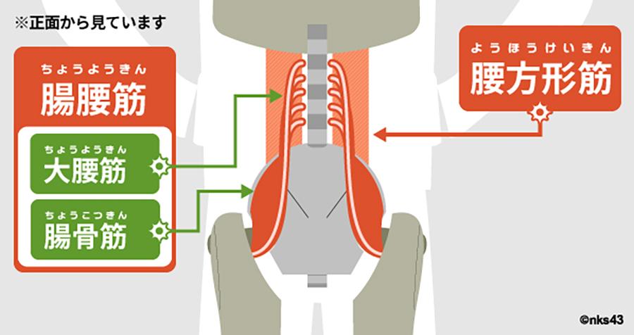 筋 腰 方形 腰方形筋の作用と役割(起始停止・神経支配・筋トレメニューなどを徹底解剖)